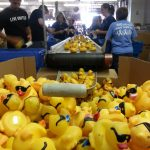 Get the Ducks Ready for the Big Race: Duck Plucking and Tagging Volunteers