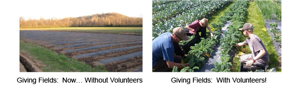 Volunteers Will Make A Difference at the Giving Fields!